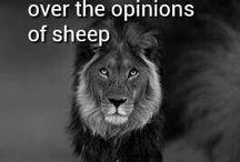 Spirit animal- Lion