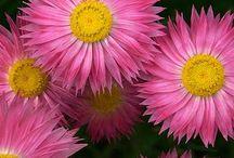 Garden / Gardens, flowers,
