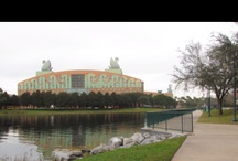 Disney Resorts / This Board is all about Disney Resorts because they are not just Disney Hotels. They are regal, progressive , historical , imaginative, and scenic  each resorts character captures us all from these places.