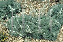 Bert's Plant List / by Colleen Wheeler