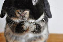 Bunny / by La Giò Giò