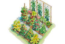 Tuin beplanning