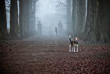 Animals || Dogs / PIEEEEEEEEEEEEEEEEEEEEEEEEEEEESEK