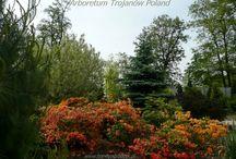 Azalie Arboretum Trojanów