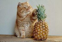 Foto's Dieren / Schattige en mooie dierenplaatjes