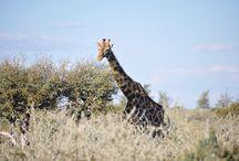 Namibia 2017 / Fotografías de la prospección previa al viaje a Namibia, marzo de 2017.