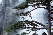 Chinese painting / Landscape