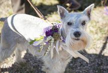 Wedding Day Pets