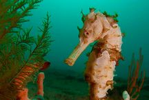 Guylian Seahorses of the World Competition 2016