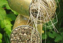 Pro hmyzáčky /// Wild sites in garden