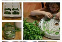 Bylinky v kuchyni - Herbs in the kitchen / Hamání, jak jinak :)