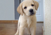 My new pup! / by Savanna Joy