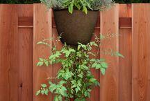 Garden365- Hanging Garden