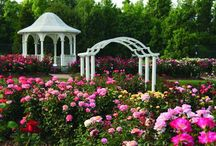 Rose Care / General care for rose bushes from Witherspoon Rose Culture.
