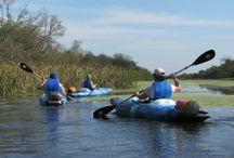 Kayaking the Gulf