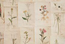 Drawings herbs & plants