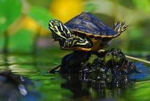 Turtle / by Deb King