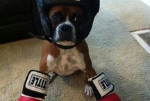 Boxing / by Mary Lanzel-Springer