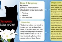 Veterinary Health Topics