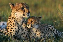 Animals  Family / 動物のファミリー