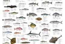 Mad about Fish / by MaxSea International