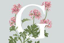 Rośliny jadalne - alfabet