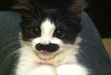 Lisa / Kitty