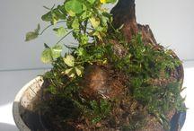 my aquacapes