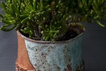 観葉植物♡ / 多肉植物やエアープランツギャラリー♡