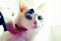 Kitty Pics / by Laura Mutter ~ Lam Art Studio
