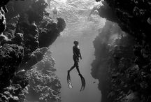 Diving and the ocean