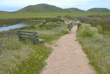 Abbotts Lagoon / by Point Reyes National Seashore Association (PRNSA)