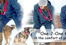 One-2-One Dog Training / Here we will post images and top tips about our one-2one dog training