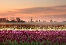 Nederland ❤