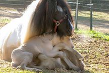 Horsey love / by Lyndsey Helley