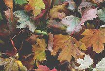 season ● autumn
