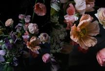Flower / お花