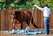 On ground horse work