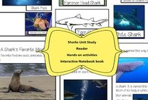 All About Sharks
