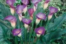 Glorious Garden / by Sheri McGill