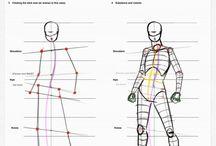 Anatomy Ratio