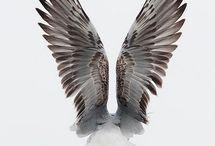 ptaki, pióra