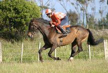 Kyrewood Equestrian Centre