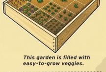 Garden to Plate / Some inspiring ideas about how to turn your garden produce into delicious food for your family & friends.