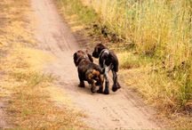 Hunde / Best Friends