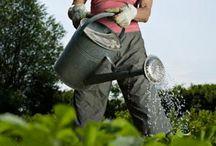 Gardening Stuff / by Kirk Padilla
