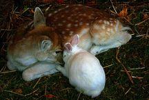 look! So Cute!!!!