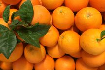 Nuestras naranjas / Naranjas recién recolectadas, del campo a tu casa en 24 horas