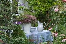 garden / outdoor