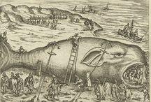 Walvis- en Potvisstrandingen